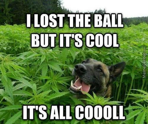 Meme_Dog_Lost_Ball_Cannabis