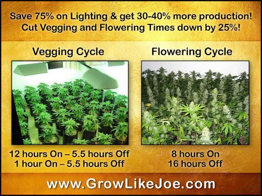 saveelectrictygrowingcannabis