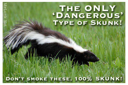 dangers_smoking_skunk_cannabis