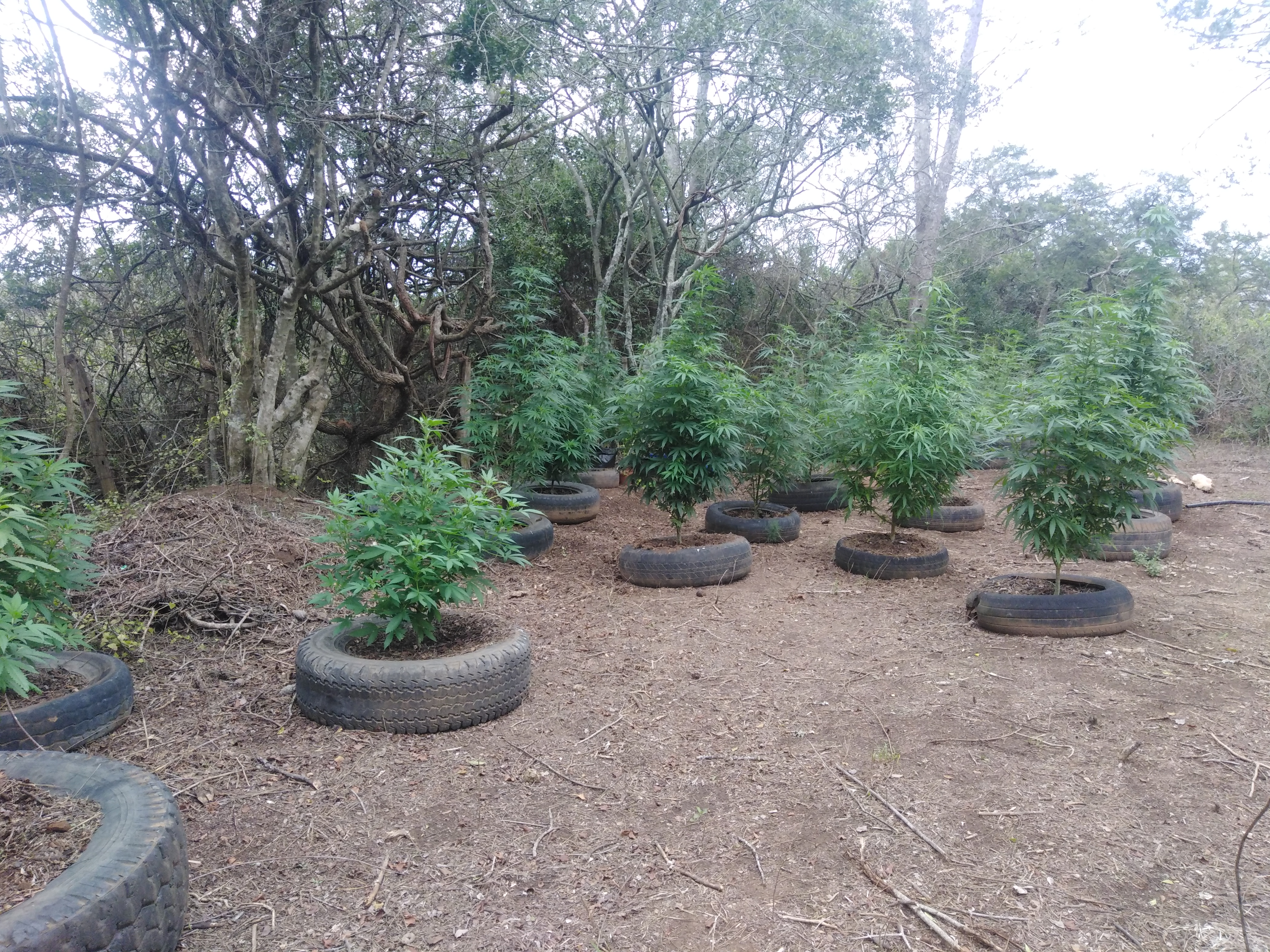 Backyard Guerilla Growing - Grow from Home - Growers ...