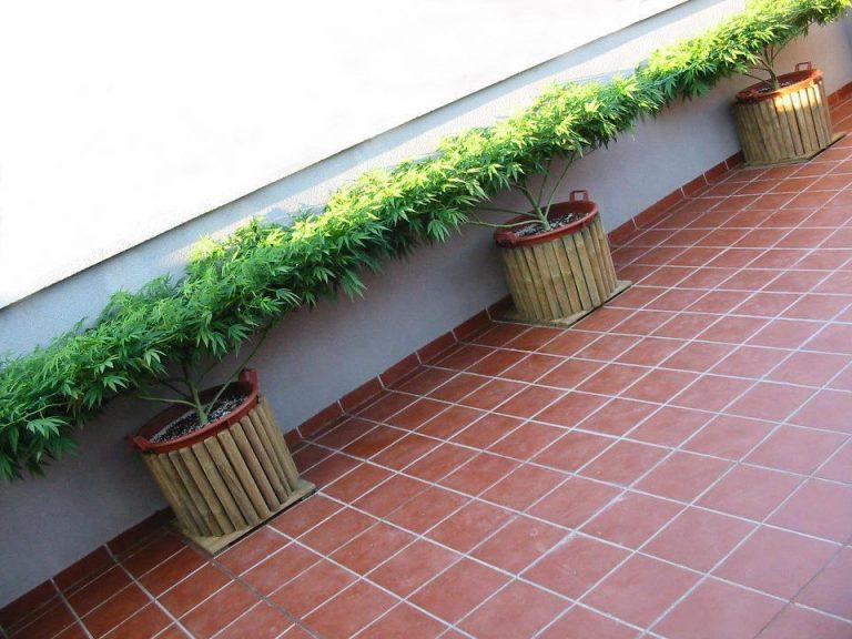 outdoor-scrog-grow-balcony-768x576
